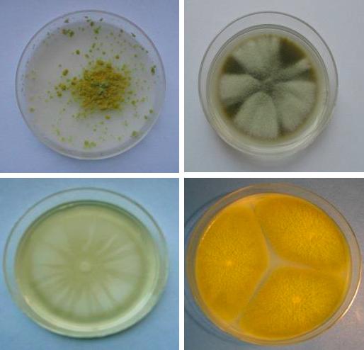Hongos y esporas en el control de la contaminación en salas de producción