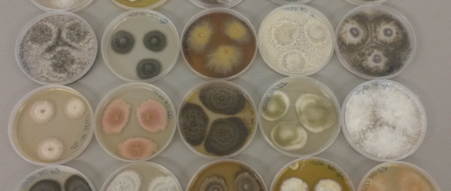 Webinar Biolog – Mejora tu Identificación de Hongos Filamentosos