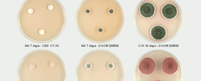 Importancia de la identificación de hongos